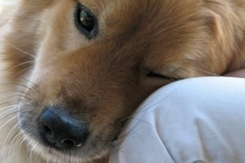 Вы даже не представляете насколько собаки умные существа!