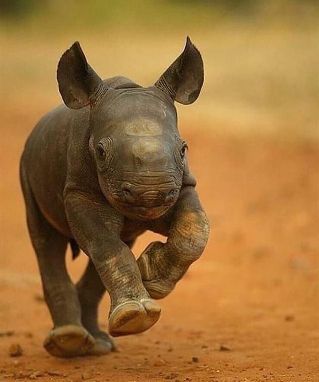 Малыши животных в дикой природе, самое милое зрелище в мире