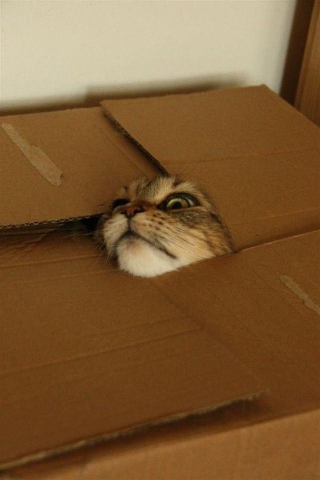 Котики, которые играют в прятки, но явно не умеют этого делать