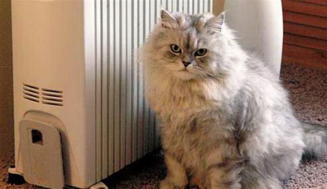 Котики, которые выражают свои чувства лучше некоторых людей