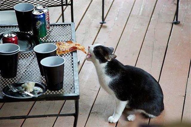 Шкодливые коты-воришки, пойманные с поличным