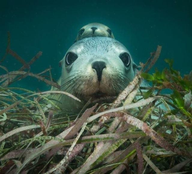 20 животных, очарованию которых невозможно сопротивляться!