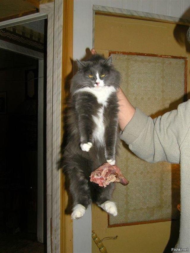 Котики, которых поймали на месте преступления