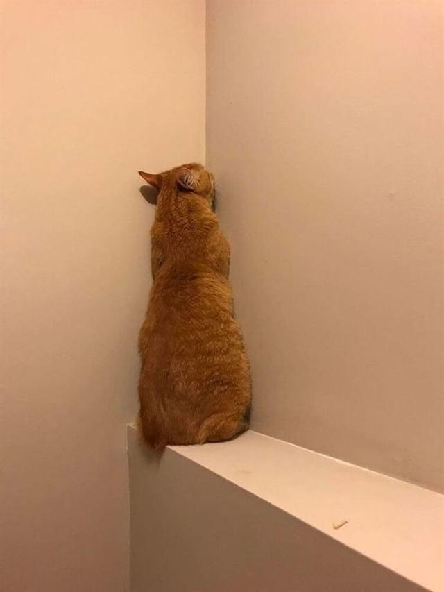 25 котов, глядя на которых НЕВОЗМОЖНО оставаться серьезным