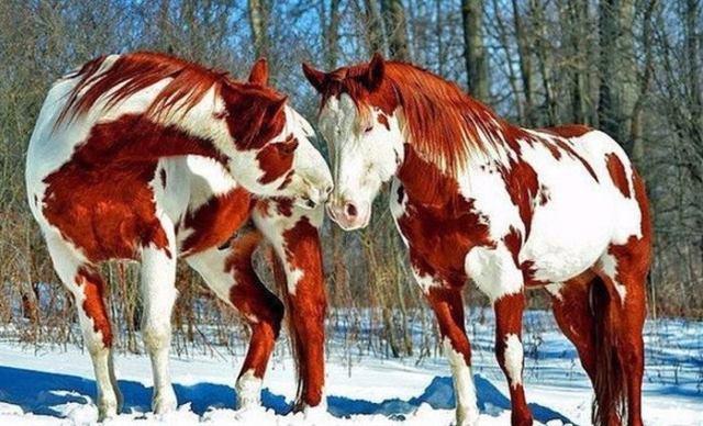 Животные с неповторимым окрасом