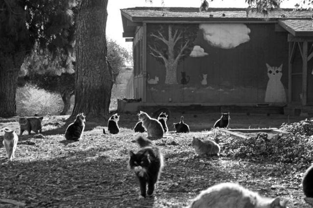 Крупнейший кошачий заповедник Калифорнии – более 700 кошек в одном месте!