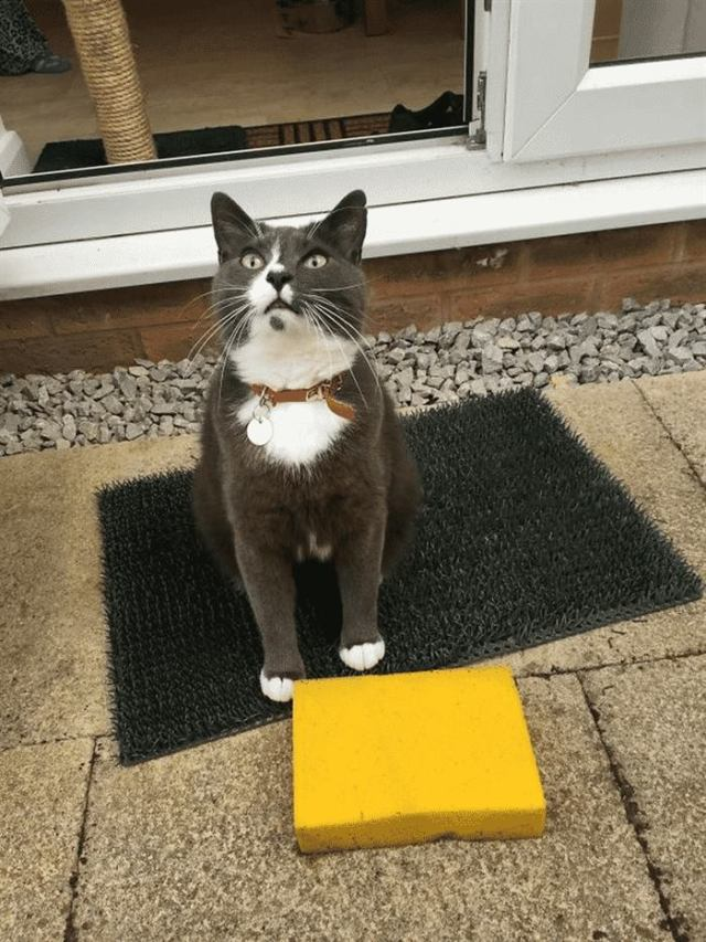 Кошки, которые приносят неожиданные подарки своим хозяевам