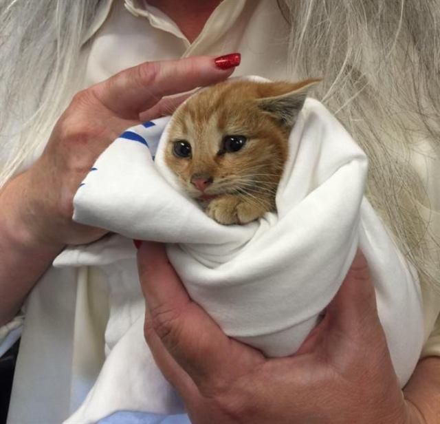 Муж с женой услышали «птичье чириканье» из мусорного бака, а нашли одинокого котёнка