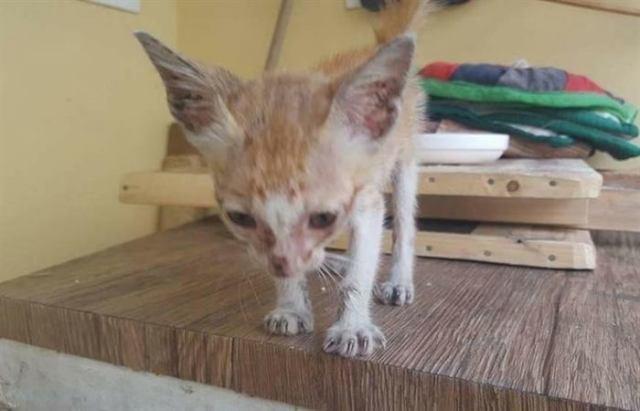 Котенок был похож на скелет, но посмотрите в кого он превратился!