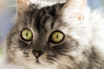 Как кошки воспринимают окружающий мир