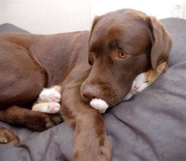 Самые смешные моменты из жизни кошек и собак живущих вместе