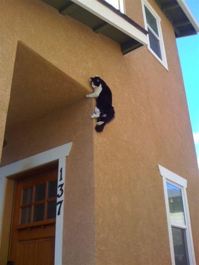 Прелестные фотографии милых котиков, которых мы обожаем
