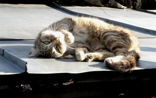 На крыше лежал кот, а над ним хищно кружила стая ворон. Кот был приклеен и вороны беспощадно клевали его