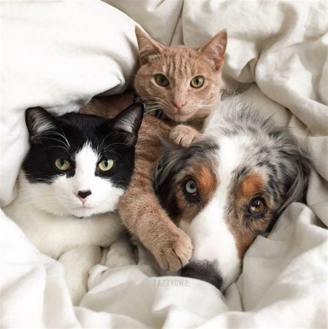 Фотографии, иллюстрирующие реально значение фразы «живут как кошка с собакой»