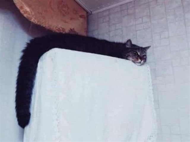 Самые наглые в своем спокойствии коты, разрушающие стереотипы