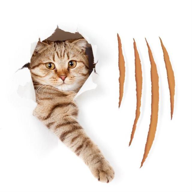 Какие люди нравятся кошкам и почему