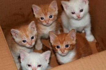 Моя мама придумала гениальный план, как пристроить всех котят из приюта