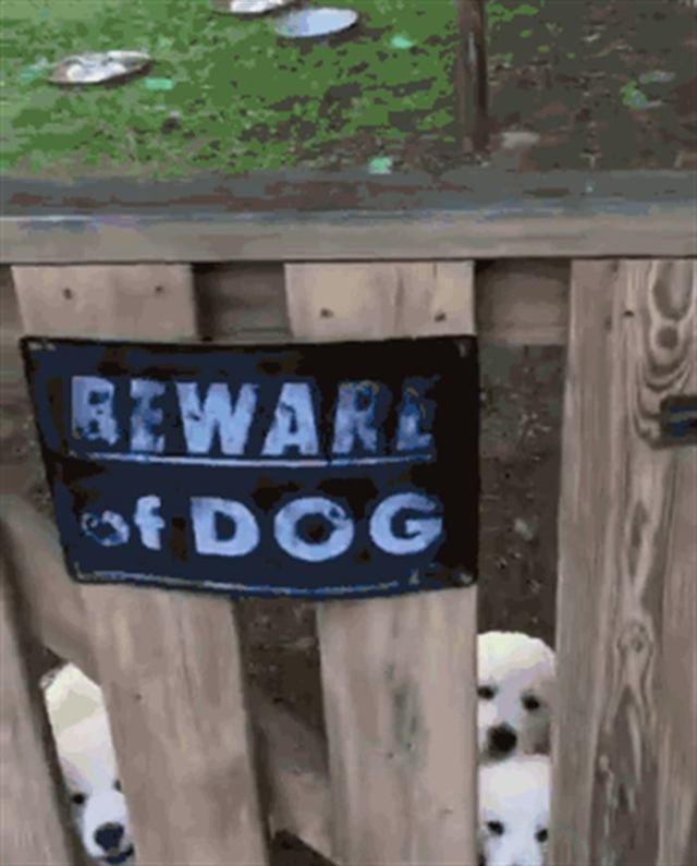 За табличкой «Осторожно злая собака!» не всегда обнаруживается таковая