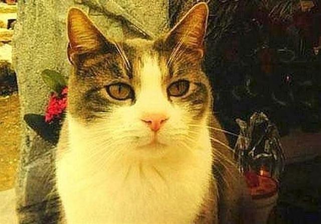 23 удивительных факта о котах, которые заставят вас замурчать