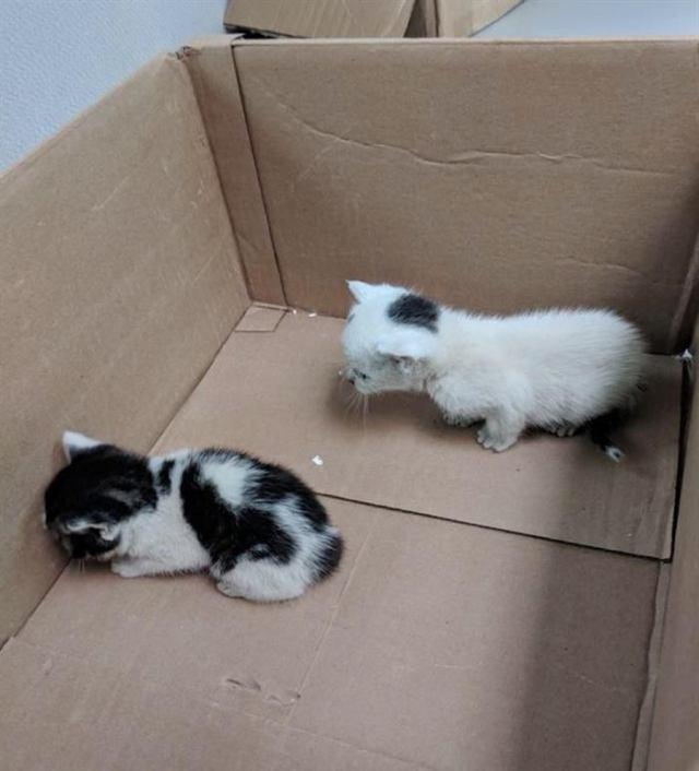 Котята были облеплены блохами… Их бросила мама, а на выручку пришли неравнодушные люди