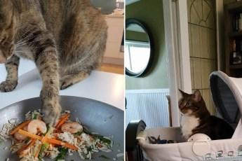 Если хотите полностью изменить свою жизнь, то просто заведите себе кота