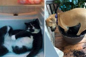 28 смешных животных, которые точно не ожидали, что их застукают на месте преступления
