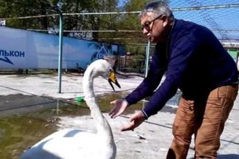 Лебедь просит защиты от доставучих пеликанов у директора зоопарка