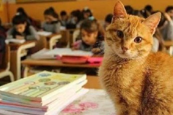 Кот учится в третьем классе и отказывается от еды, когда его не пускают в школу