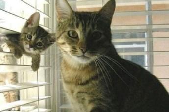 «Я люблю тебя, малыш!» 10 самых милых фото кошек с котятами
