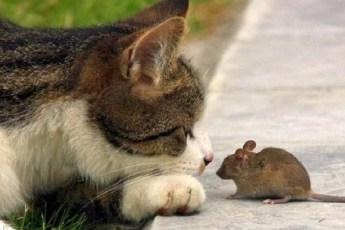 Очаровательная дружба между кошками и мышками