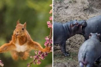 Самые смешные фотографии дикой природы за этот год