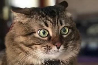 7 странных привычек у кошек, которым есть объяснение