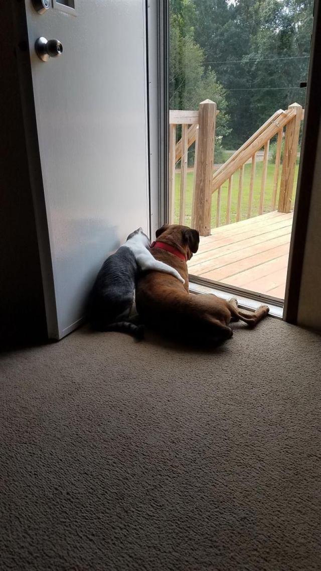 Самая лучшая собако-кошачья дружба