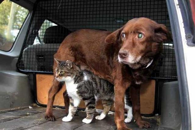 Замечательные фотографии кошек с собаками, согревающих сердце