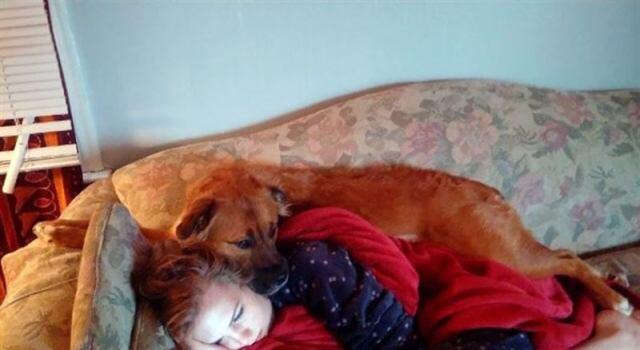 20 фото, доказывающих что собаки — последние Ангелы на Земле!