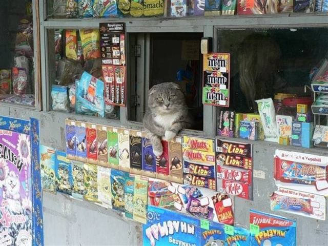 Котиков можно встретить в самых странных местах