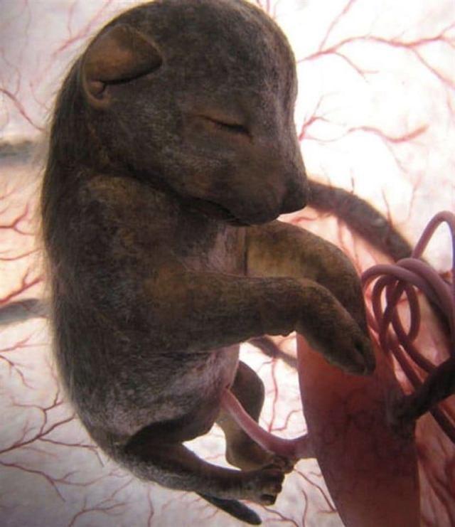 Невероятные снимки малышей животных из утробы матерей