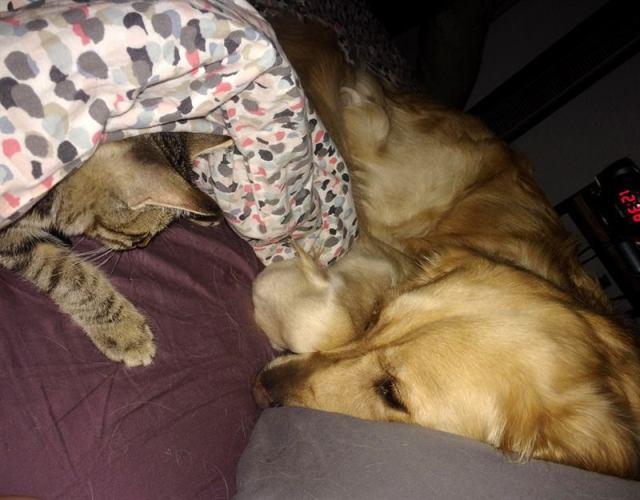 Пёс помог бесприютному котёнку пробраться в дом – теперь им обоим не будет одиноко