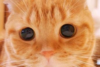 Какие они самые красивые в мире кошки?