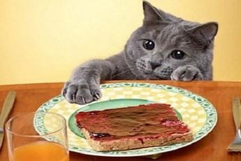 Котики которых поймали с поличным за воровством еды