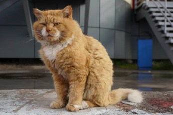 Кеша — единственный кот на норвежском архипелаге Шпицберген