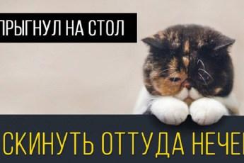 Мы и не задумывались, по каким поводам котейки могут грустить