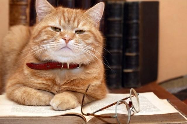 Британские ученые попытались точно выяснить, каков IQ у котов