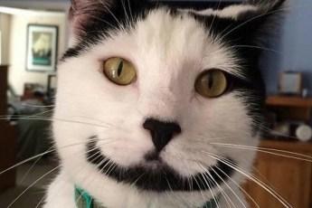 Милые котики с забавным окрасом