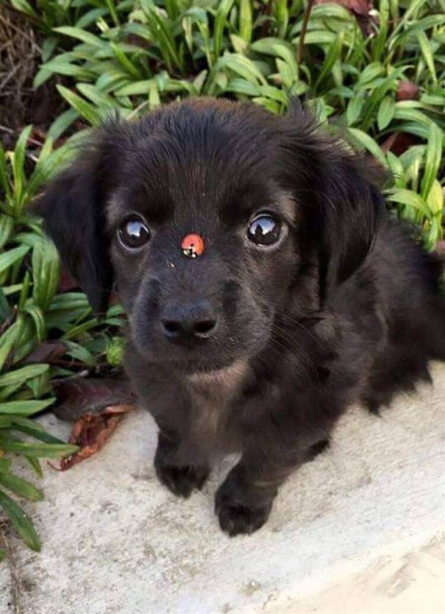 Милые щеночки, которые влюблять в себя с первого взгляда