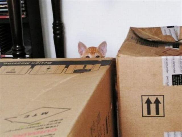 Котики, которые считают, что их никто не видит, и они спокойно наблюдают