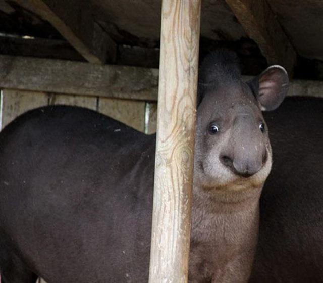 30+ ржачных фото нефотогеничных животных, поднимающие настроение прямо с утра
