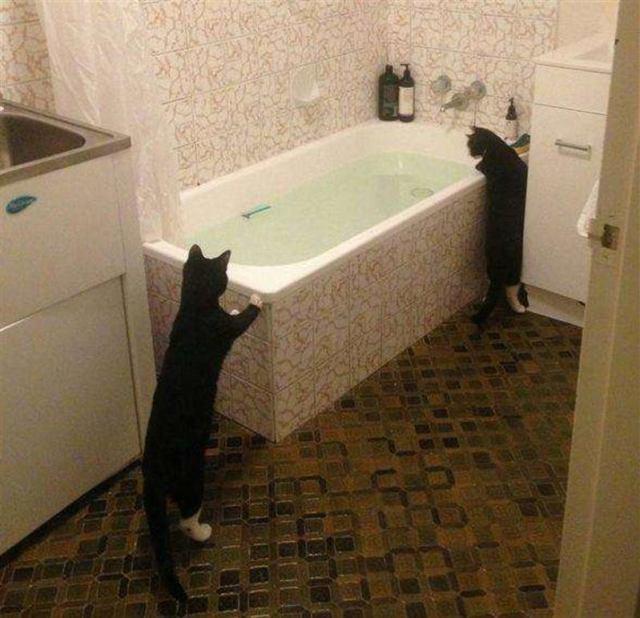 Эти котики развеют миф о боязни ими воды