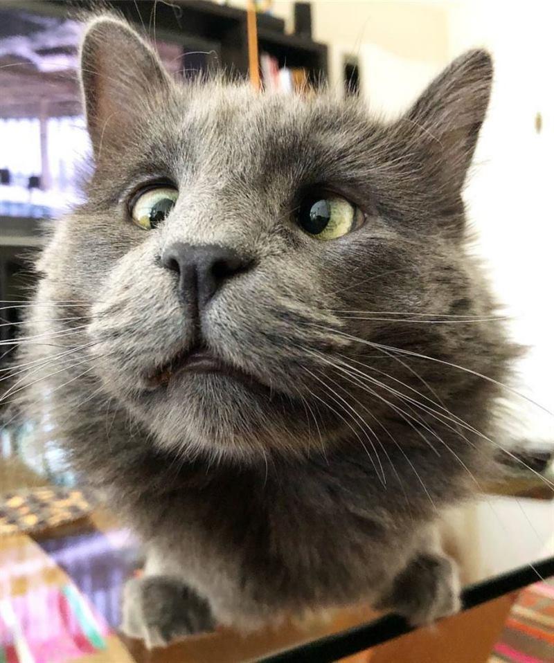 коты с косыми глазами фото это друг, который