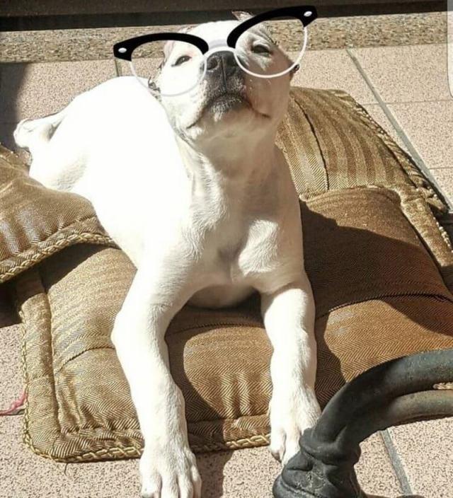 Я свято верю, что собака — последний ангел на Земле!